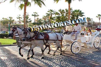 Latest Double Horse Victoria Carriages